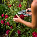 Maintaining a Garden – Ideas and Expert Tips