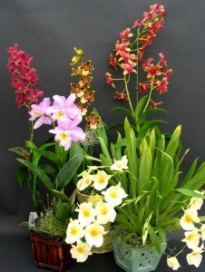 orchid care - how to care for orchids