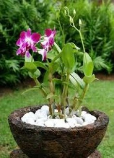 orchid care - orchid diseases and orchid pests