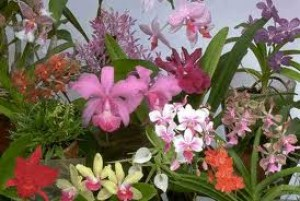 orchids care - feeding orchids