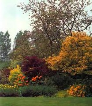 planting the garden - colourful tree and shrubs