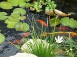 Caring for Pondfish and Water Garden Ponds in Winter
