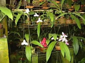 propagating orchids