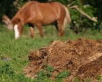 Sources of Manure Fertilizer to Enrich Garden Soil