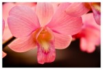 How to Care for Orchids – Watering Orchids and Damping