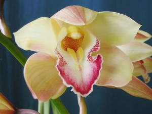 growing orchids - orchid information
