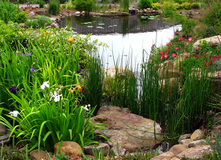 Water garden plants for water garden ponds for Plants for around garden ponds