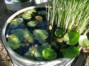 Container Water Gardening How To Make A Container Water Garden