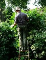 Garden Safety Guidelines and Tips