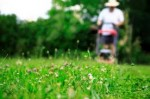 Grass Mowing Tips for the Best Garden Lawns