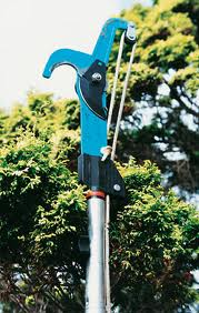 hand tools for gardening - tree pruning