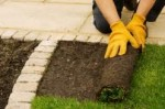 Lawn Repair Advice for Neglected Garden Lawns