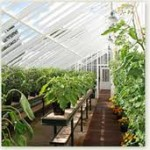 Planning a Greenhouse – What to Grow in Your Greenhouse