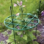 Plant Support Rings and Plant Stakes