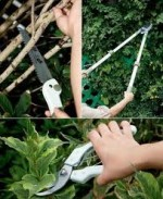 Principles of Pruning Plants