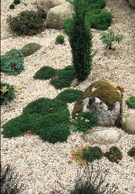 Creating a Scree Garden – Rocks, Stone and Gravel in the Garden