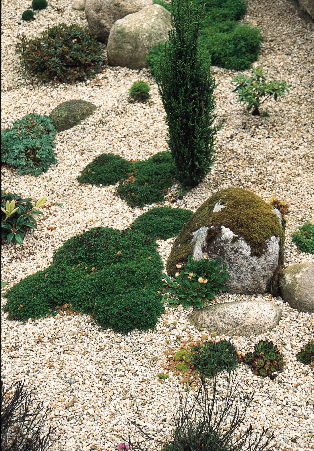 Creating a scree garden rocks stone and gravel in the for Stone pebbles for garden
