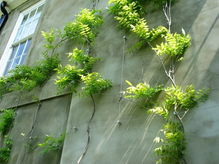 How To Train Climbing Plants And Wall Plants Gardening