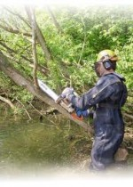 Tree Surgery, Tree Felling, Tree Pruning, Tree Surgery Equipment