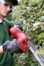 General Care of Hedging Plants and Trimming Hedges