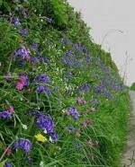 Hedges as Habitats for Wildlife