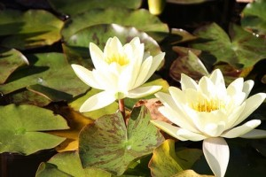 Organic Gardening - Ponds as Habitats for Wildlife