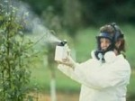 Garden Pests and Diseases – Pesticide Sprays