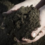 Managing Your Soil