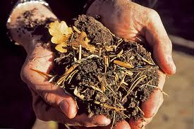 how to compost - making leafmould