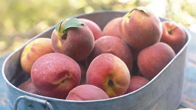 Pests and Diseases of Top Fruit - peaches