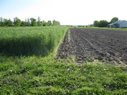 ways to control weeds - stale seedbed