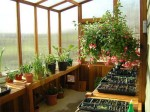 Greenhouse Benches and Greenhouse Shelving