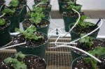 Greenhouse Watering and Feeding Equipment