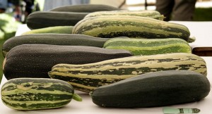Growing Marrows, Peppers and Aubergines