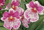 Orchid Care Information