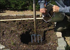Preparing the Soil for Growing Roses