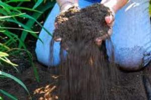 Macro Elements in Soil for Plant Nutrition