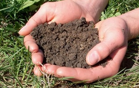 Chemical soil sterilization for What substances are in soil