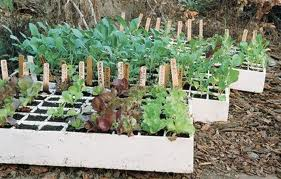 Containers for Propagation and Seed Sowing