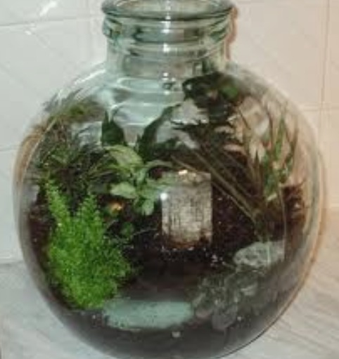 Gardening In Bottle : Ferns Growing in Wardian Cases and Bottle Gardens
