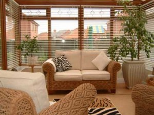 indoor plants for a conservatory