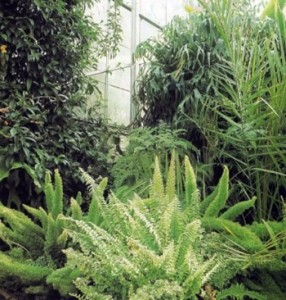 History of Growing Ferns in Great Britain