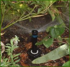 garden watering systems - maintenance of ornamental shrubs
