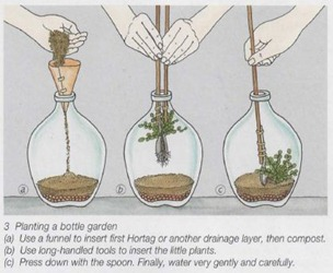 planting a fern bottle garden
