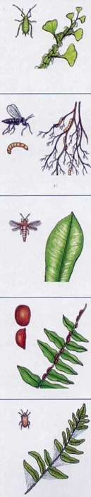common pests on indoor ferns