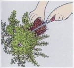 How to Propagate Indoor Ferns