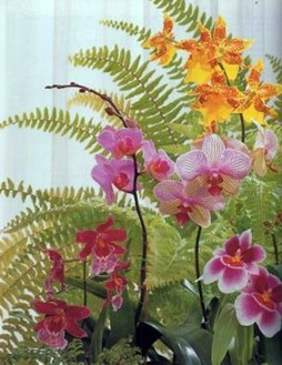ferns and orchids