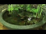 Planting New and Established Garden Ponds