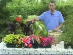Water Gardening: Tubs and Containers