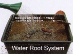 Planting a Garden Pool: Creating a Natural Balance